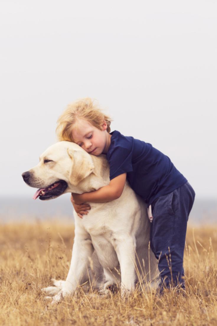 Adorable Boy Hugging Her Labrador Retriever Happy Kid With Big White Dog Outdoors Child Labrador Retriever Funny Labrador Retriever Black Labrador Retriever