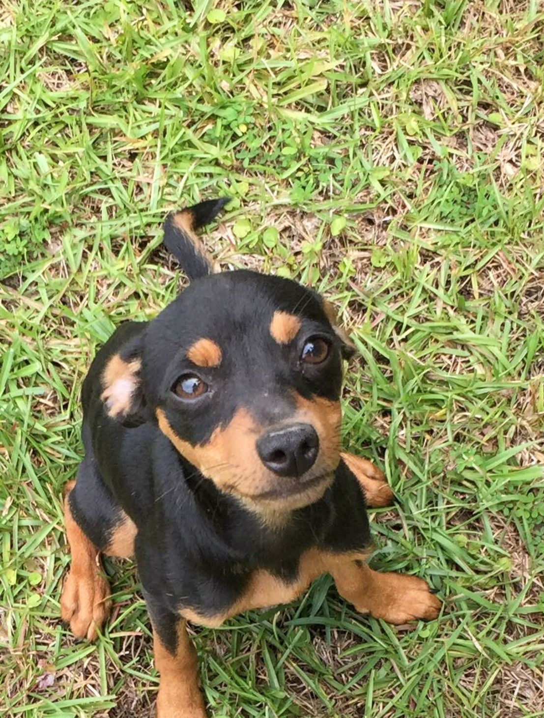 Adopt Mila On Sausage Dogs Rescue Dogs Lucky Puppy Puppies