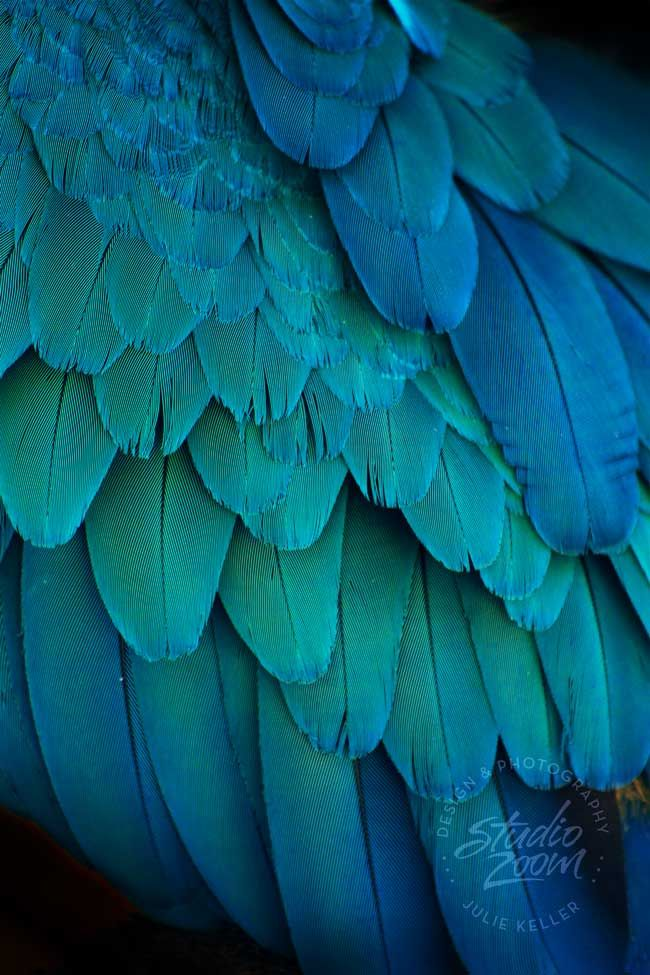 Blue And Green Bird Feathers Photography Print Exotic