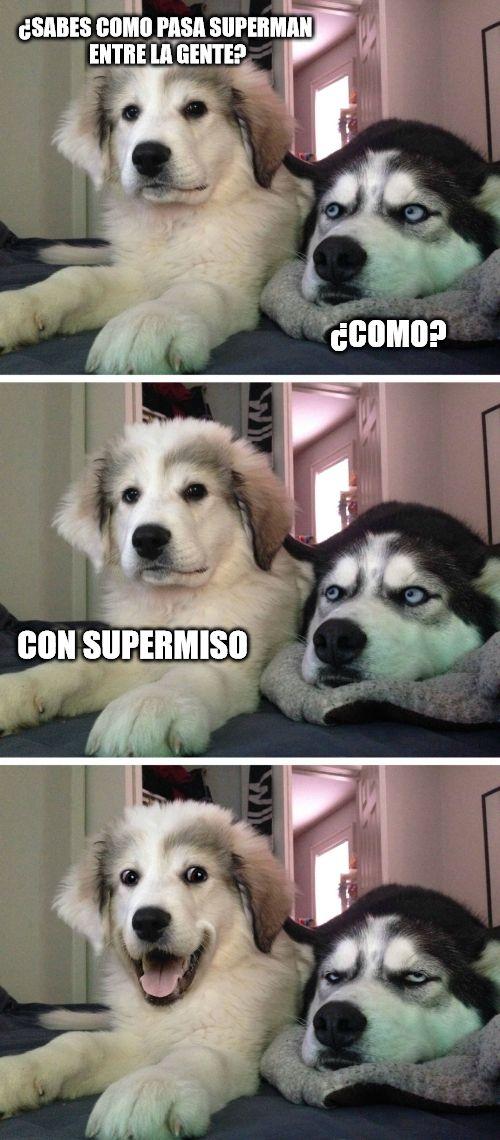 Pin De Max Martinez En 0 Memes Divertidos Humor De Perros Chistes Graciosos