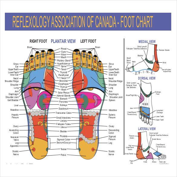 Reflexology Foot Chart Pdf Boatremyeaton