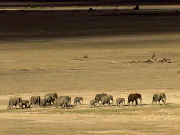 Walking elephant family