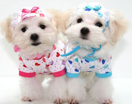Pin Em Dog Fashion