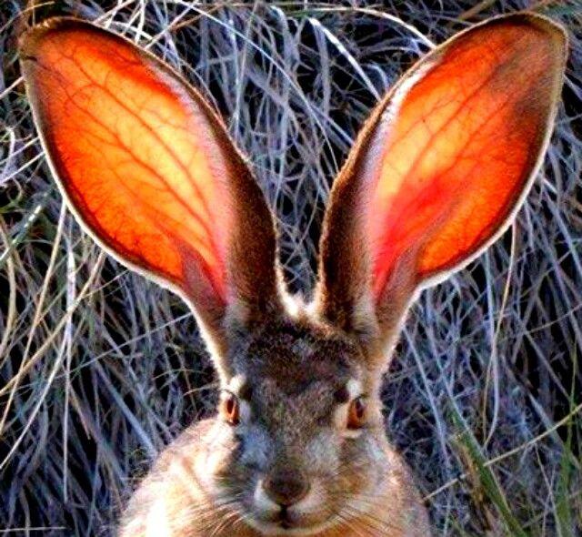 Смешные картинки зайцами, очень смешная картинка