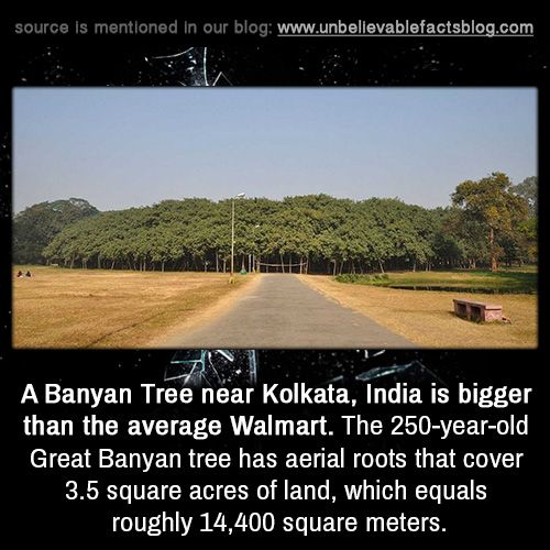 Unknown Places To Visit In Kolkata: A Banyan Tree Near Kolkata, India Is Bigger Than The