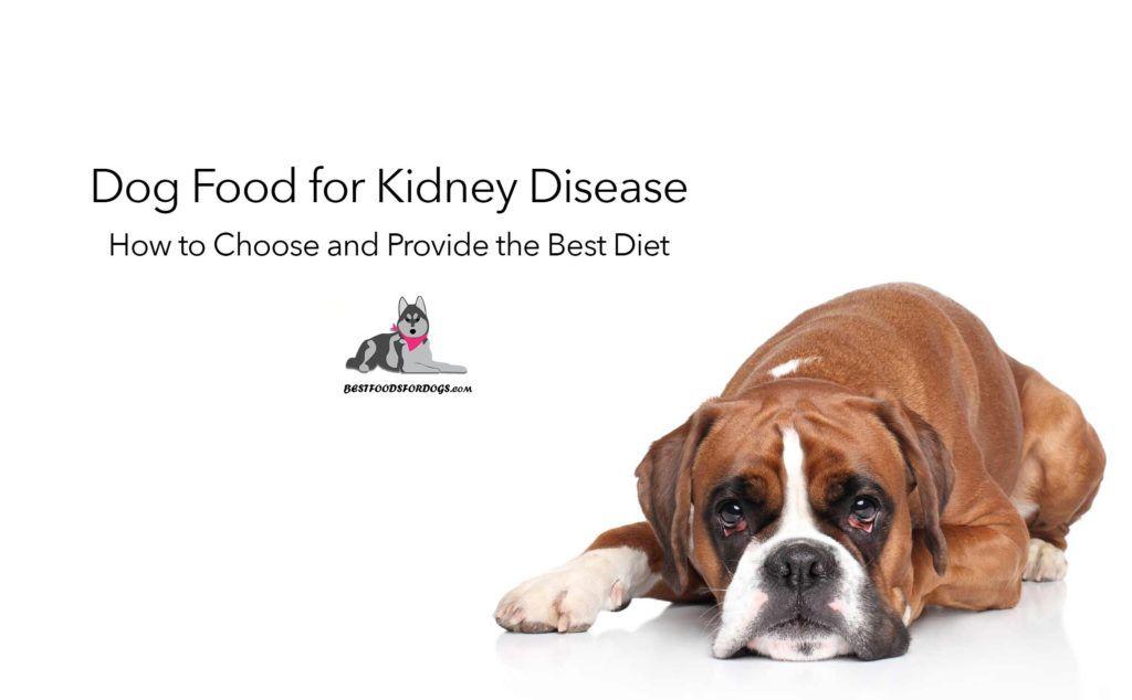 Best food for dogs kidney disease kidney recipes