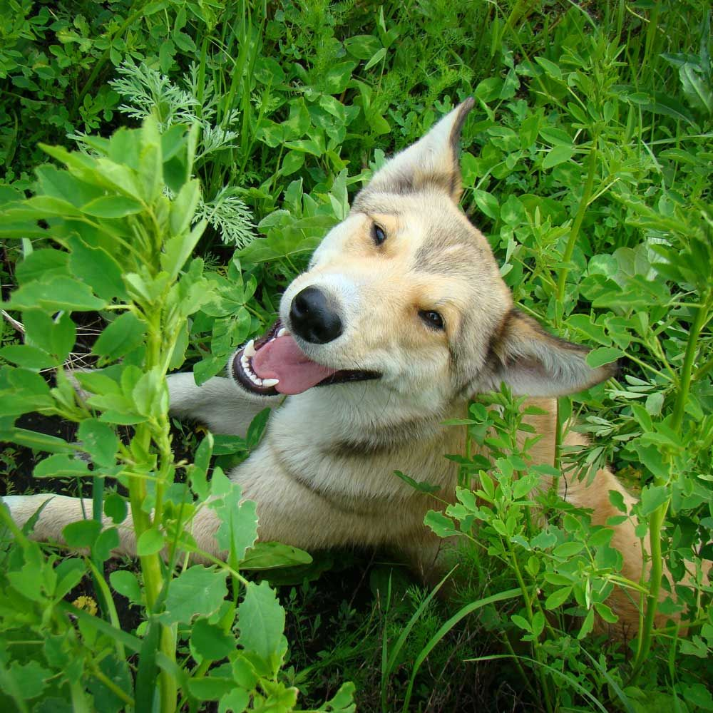 Leafy Green Vegetables For Dogs and Cats Animal Wellness