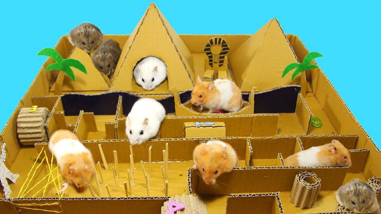 Diy Pyramid Race From Cardboard For Many Cute Hamsters Youtube