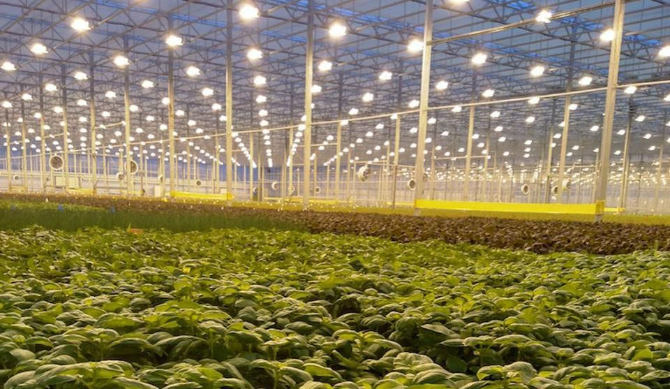The 25 Most Innovative AgTech Startups In 2018 Indoor
