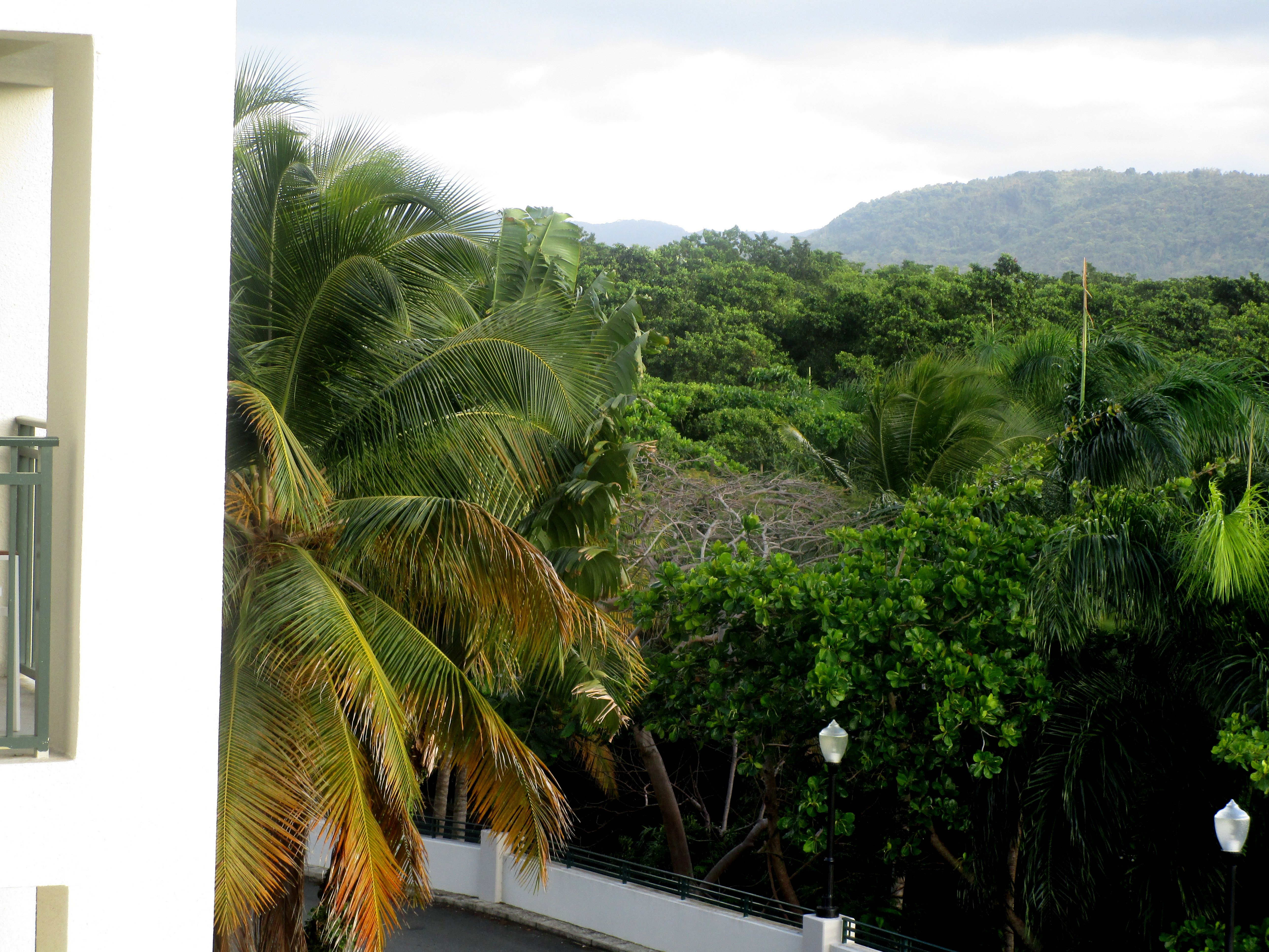 view from our room at Wyndham Hotel - Puerto Rico
