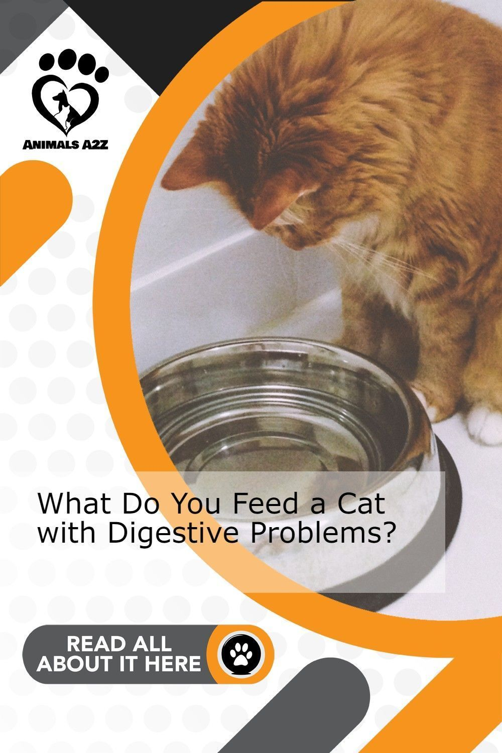What Do You Feed A Cat With Digestive Problems In 2020 Best Cat Food Dry Cat Food Cat Care Tips