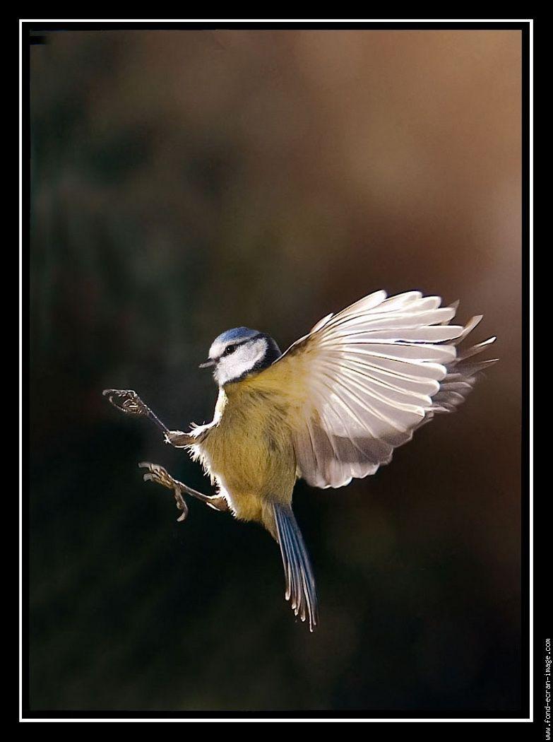 Oiseau en plein vol animaux oiseaux photo oiseau - Dessin oiseau en vol ...