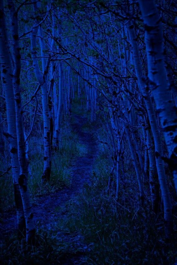 Photo Google Photos Blue Aesthetic Feeling Blue Blue Forest