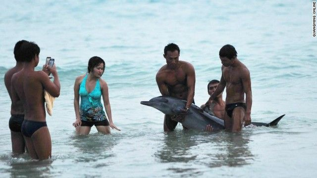 A dolphin died in the southern Chinese city of Sanya Monday after tourists near the shore mistreated the dying animal. Photos on China's microblogs showed that tourists -- instead of helping the dolphin -- were lifting and mistreating it before rescuers arrived. One of the pictures showed a man flexing his muscles in front of a group of swimmers holding up the dolphin soon went viral on the social network sites.