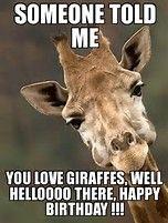 giraffe birthday meme Image result for Giraffe Happy Birthday Meme | facebook  giraffe birthday meme