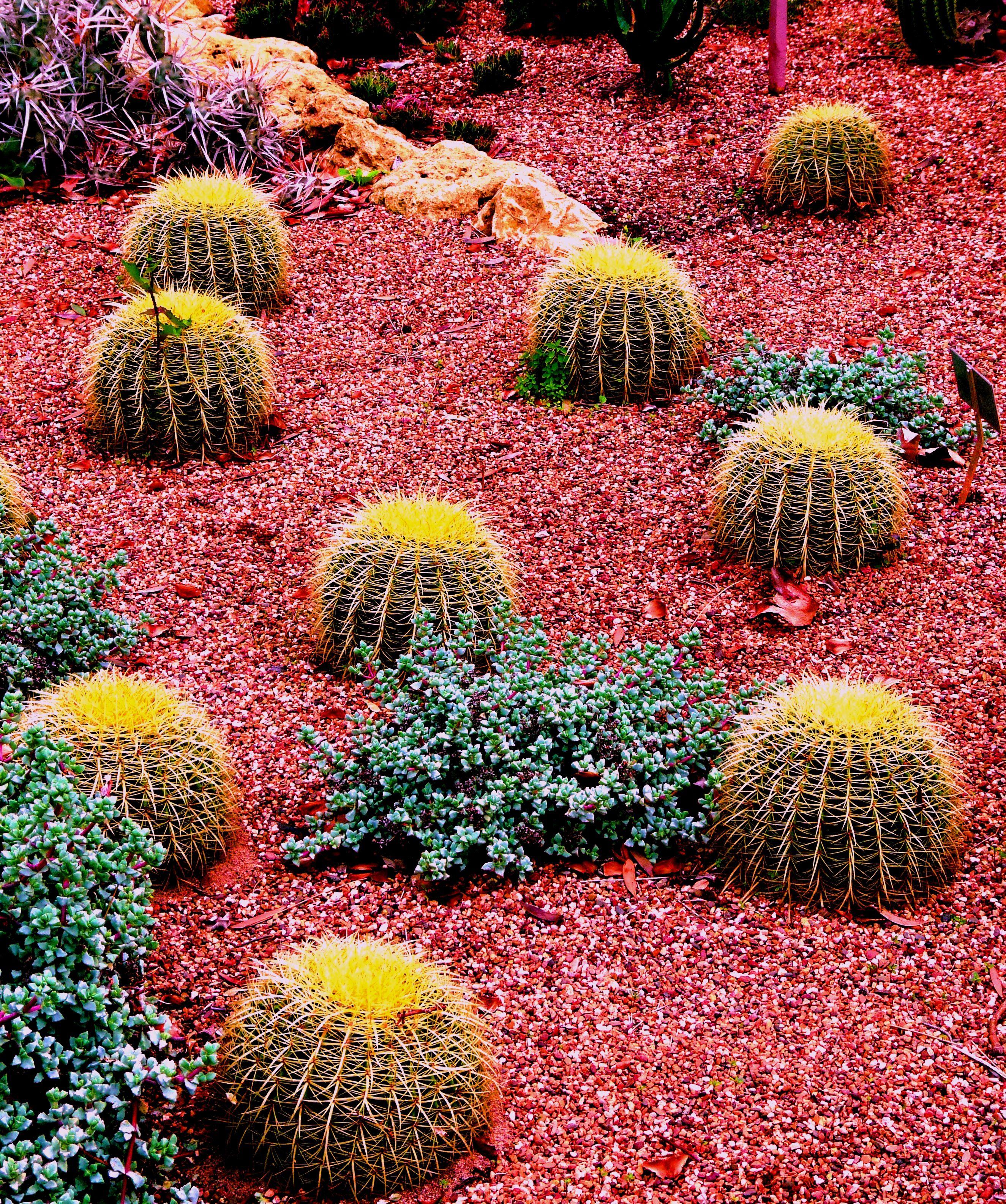 57 Amazing Beautiful Garden Ideas Inspiration And: Colorful Cactus Garden
