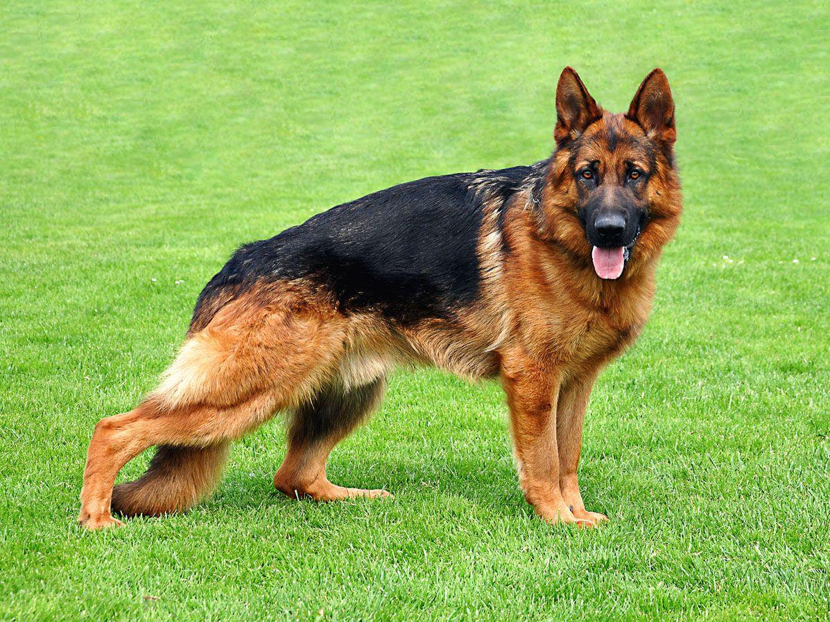 25 most dangerous dog breeds