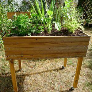 Quand planter ses légumes, variété par variété | Potager ...