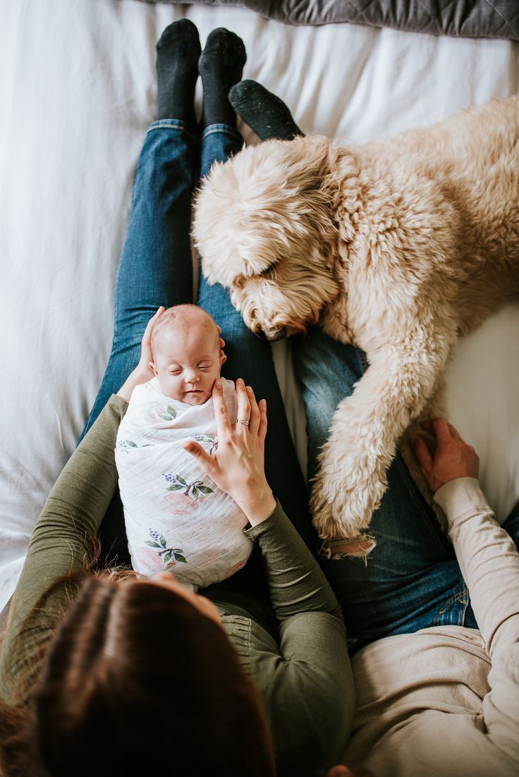 In-home newborn session. Lifestyle newborn session. Dog and Baby. Seattle-Tacoma...