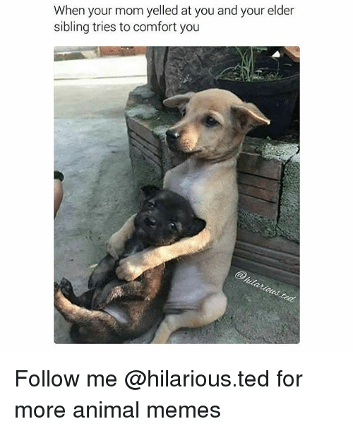 Funny Memes And Ted When Your Mom Yelled At You And Your Elder Sibling Tries To Comfort You Follow Me Hilario Funny Mom Memes Dog Quotes Funny Mom Memes