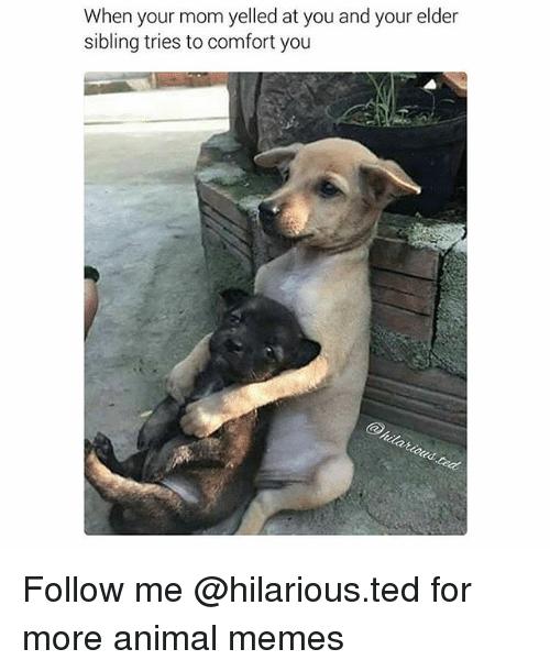Older Sister Memes : older, sister, memes, Funny,, Memes,, Yelled, Elder, Sibling, Tries, Comfort, Follow, @hilario…, Funny, Quotes, Memes