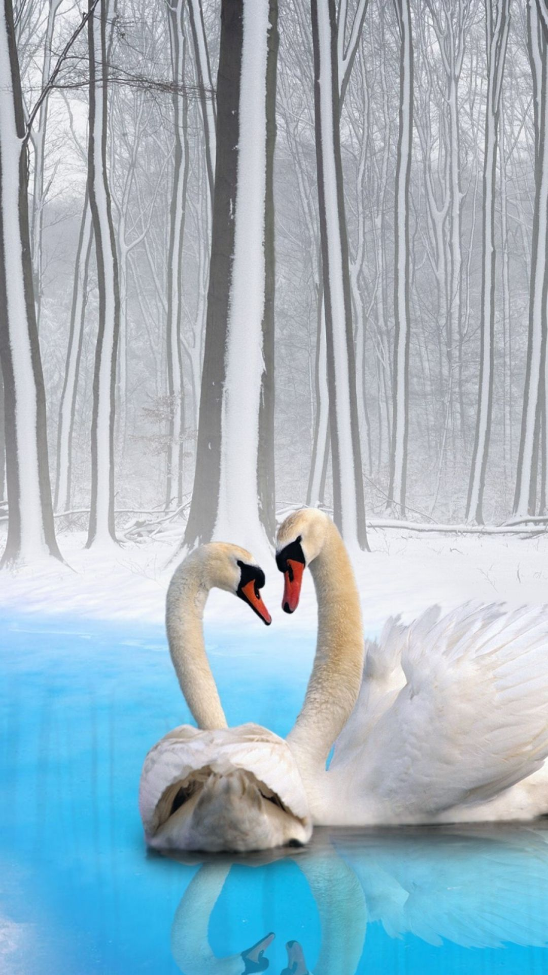 ❄️ Winter blue is magic❄️ / Winters loyal swan couple.