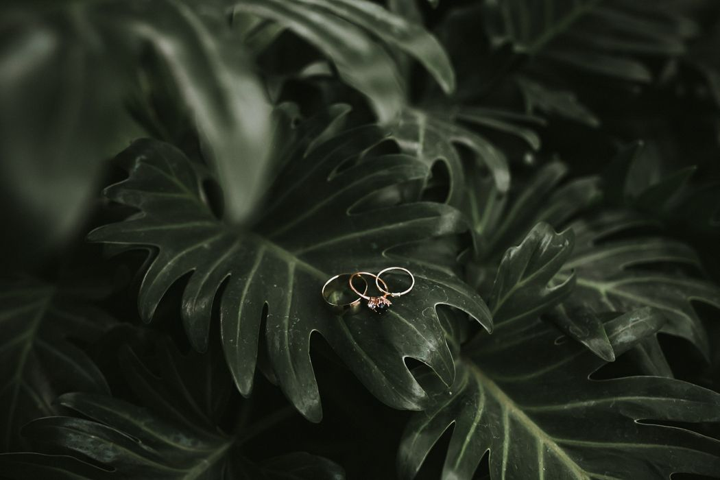 Palm leaves & pretty rings | Image by Krista Ashley Photography