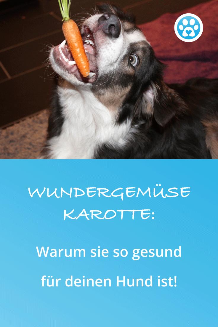 Wundergemüse Karotte: Warum sie so gesund für deinen Hund ist!