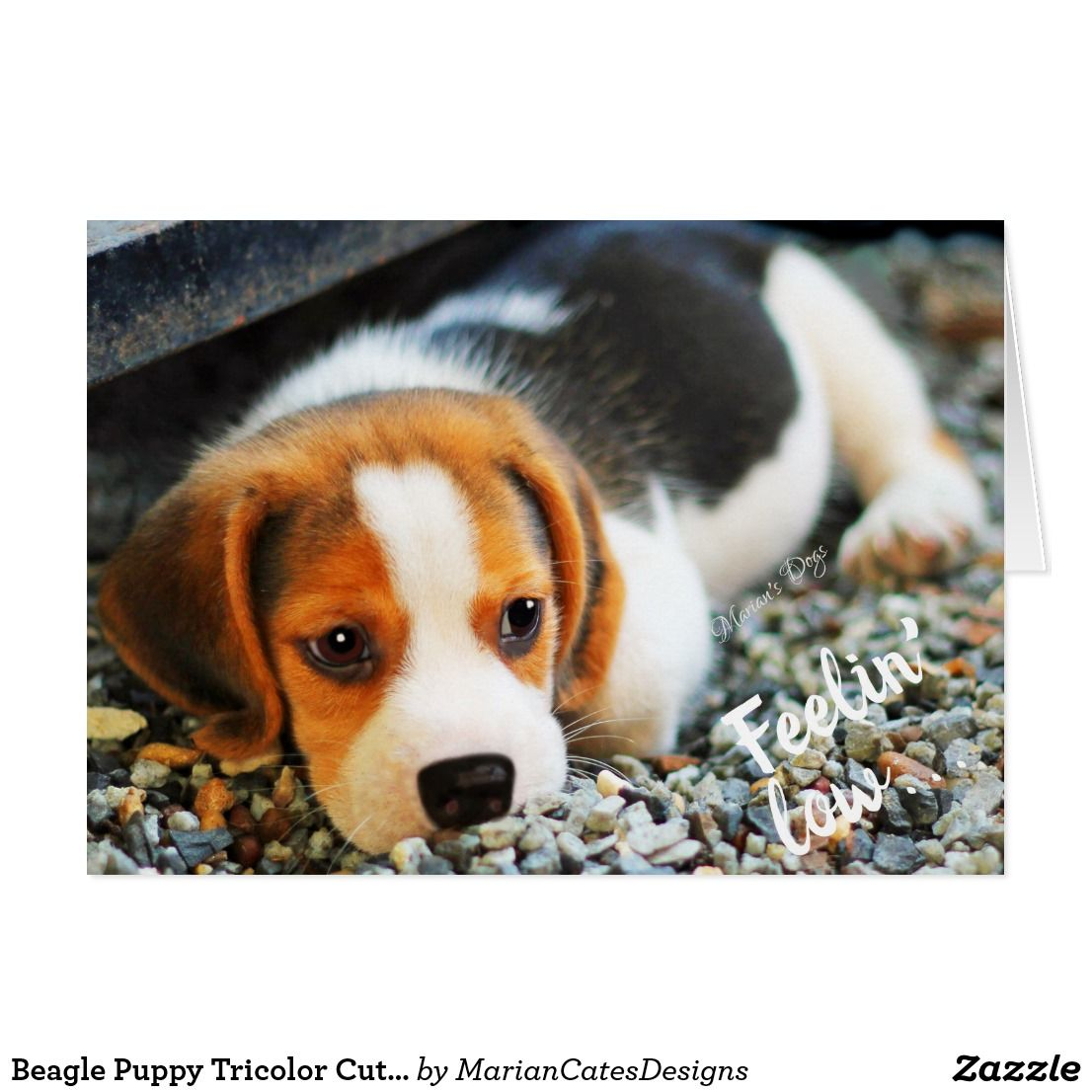 Beagle Puppy Tricolor Cute Adorable Missing You Card Zazzle Com