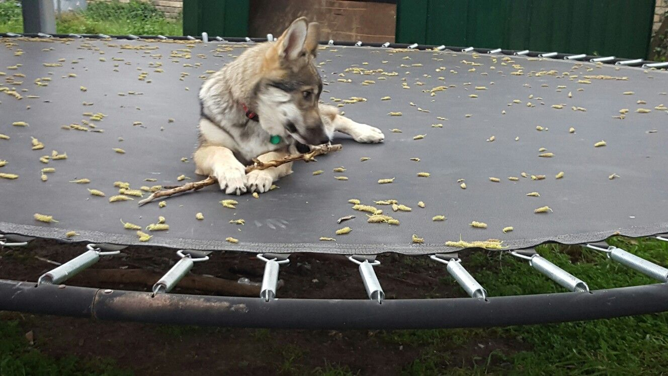 Flower Running Wolf age 4 months