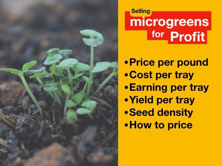 Selling Microgreens For Profit — [price, expenses, seed