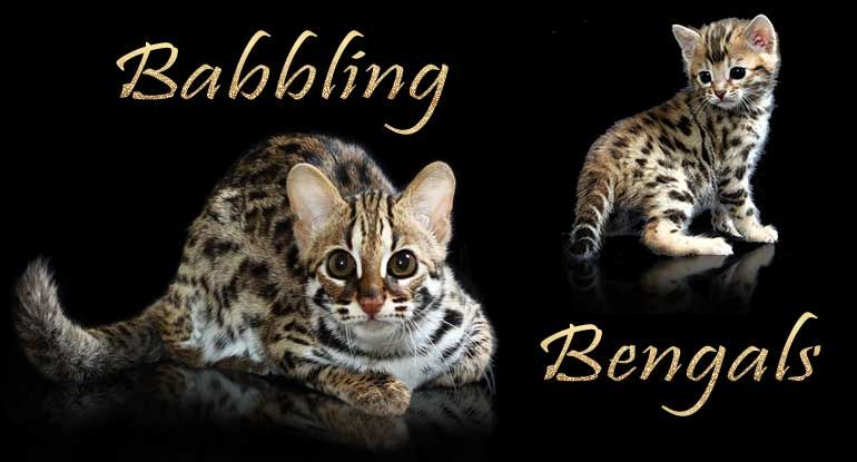 Bengal Kittens For Sale Maryland Nj Ny Pa Bengal Kitten Bengal Cat For Sale Bengal