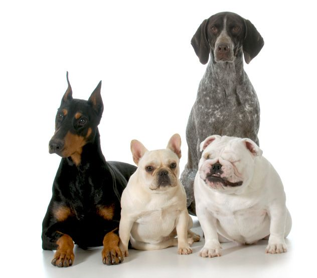 Selecting The Perfect Dog For You And Your Family Can Be A Laborious Task By Using This Dog Breed Selector You Can Learn Whic Dog Breed Selector Dog Breeds