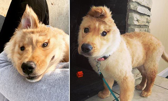 Unicorn Puppy With Ear Sticking Out Of Her Head Is Social Media