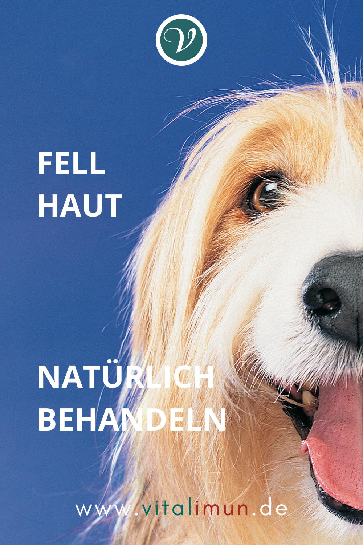 Pin Auf Hund Kranker Hund Naturlich Gesund