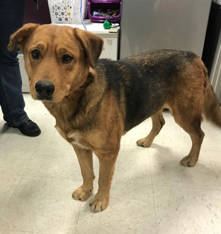 German Shepherd Dog dog for Adoption in Maple Grove, MN