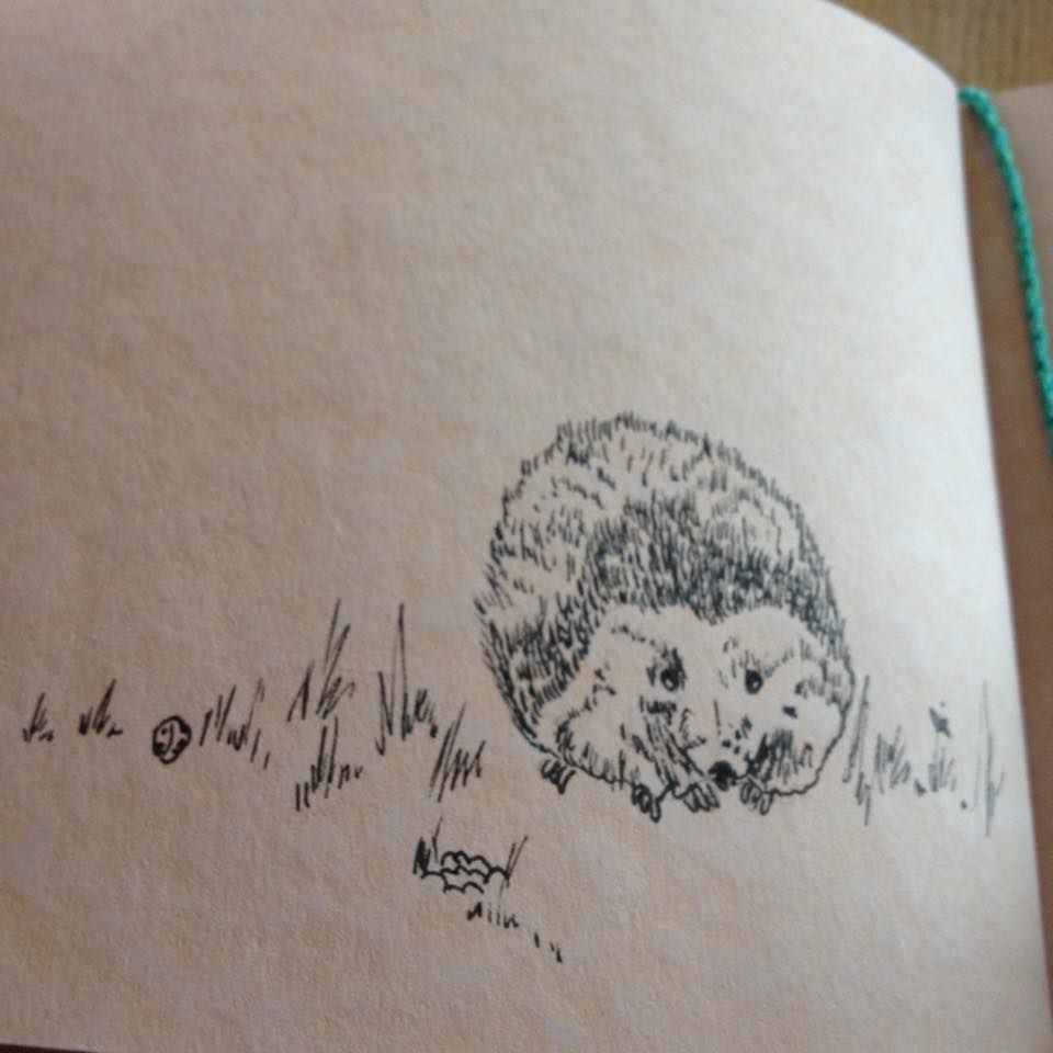 Hedgehog - 23 Jan 15