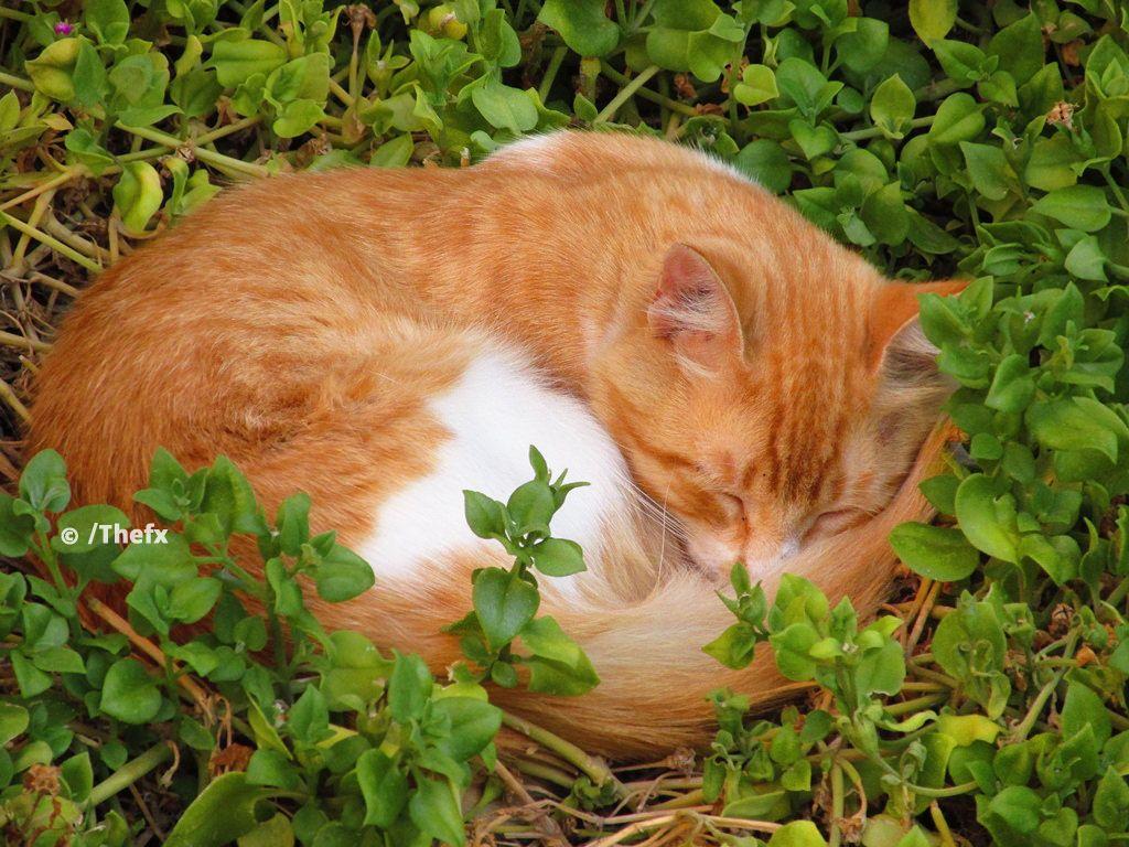 778:  Gato (via Thefx / Francisco) http://cybergata.tumblr.com/