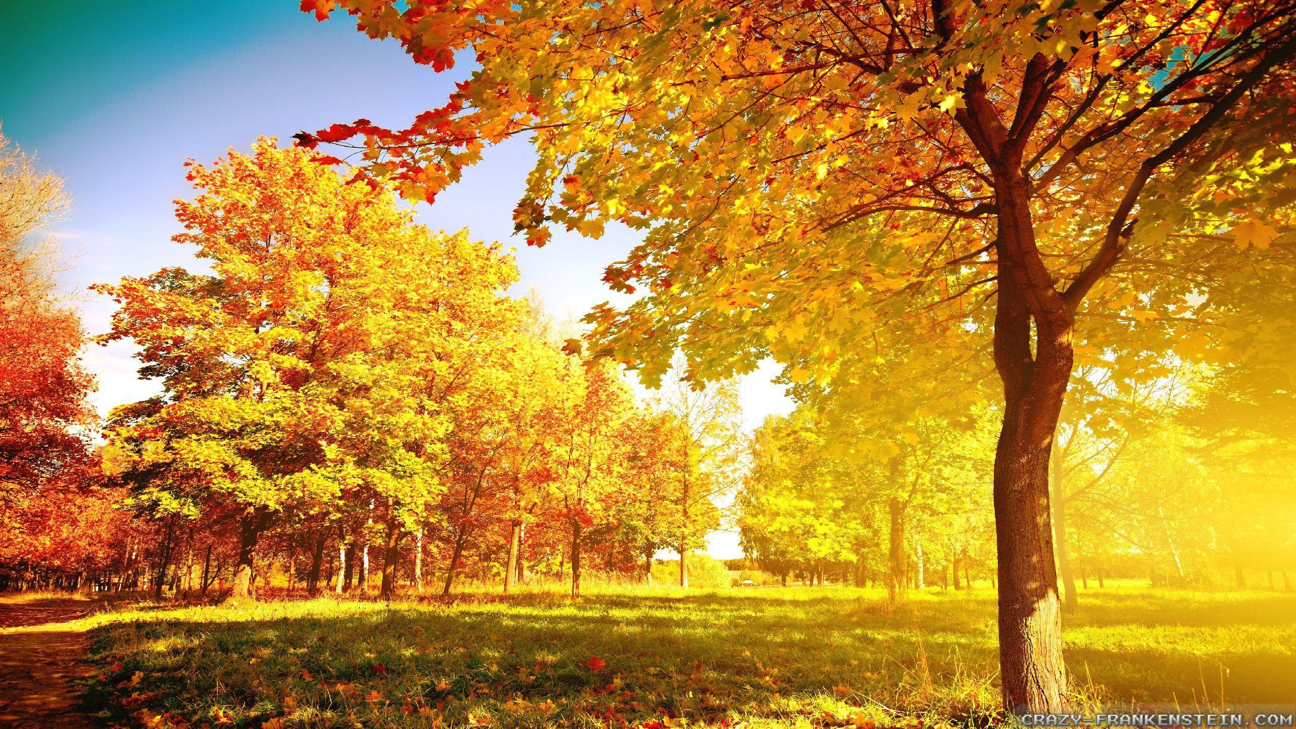 pinsophia oyarzún on places | pinterest | autumn trees, 3d