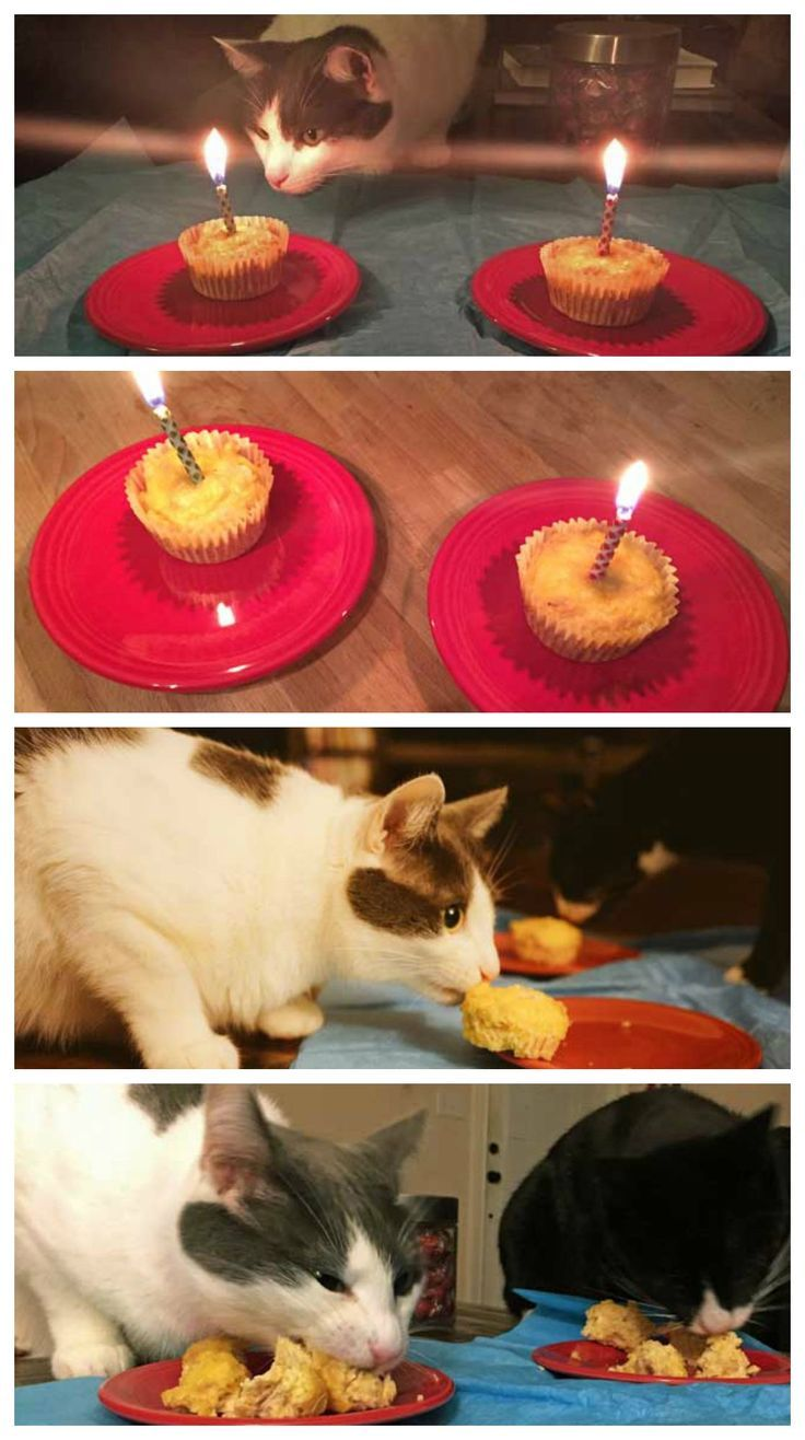 How to make a birthday cake for your cat Birthday cakes Cat and