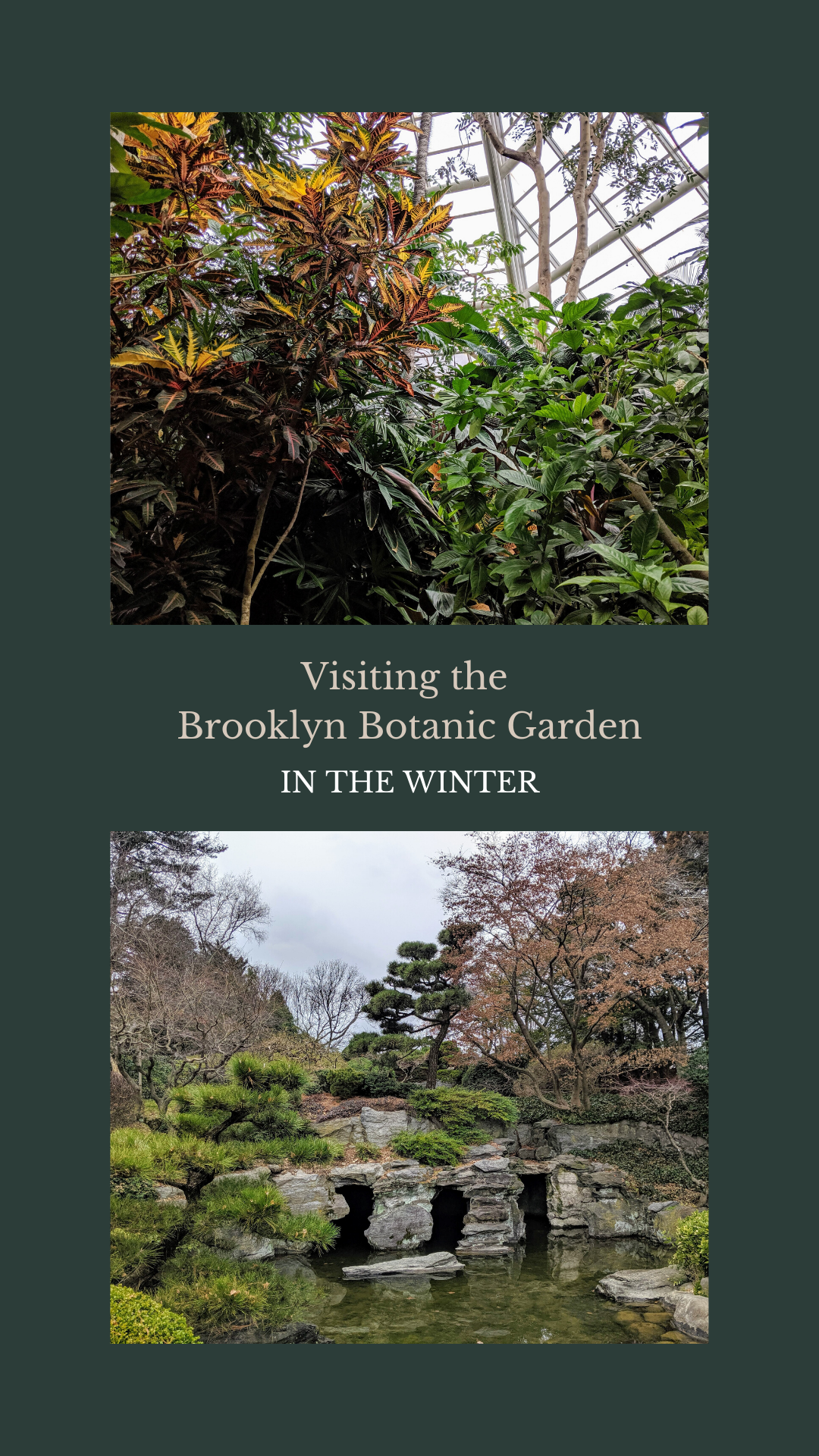 Should You Visit the Brooklyn Botanic Garden in the Winter