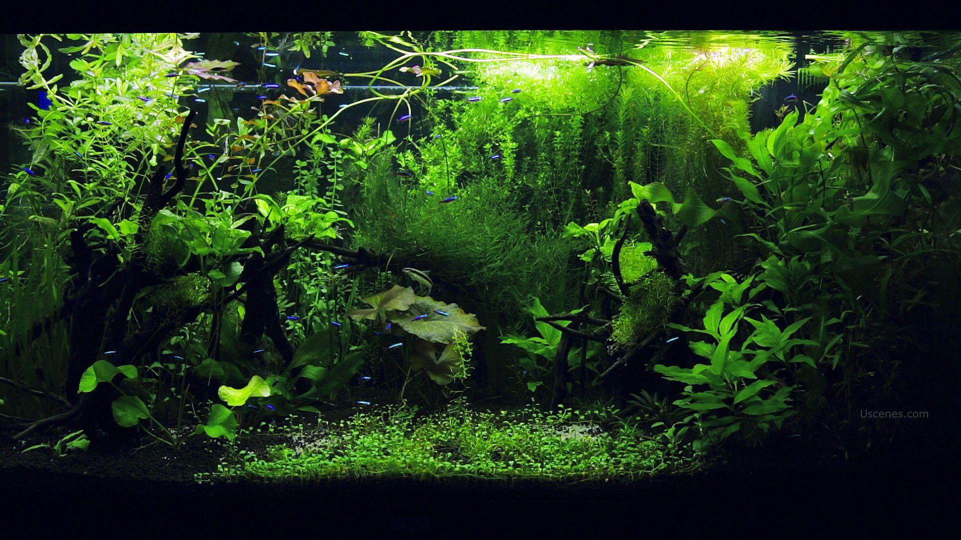 46b44105922652fec54d68f723b12d29 Frais De Aquarium En Bois Schème
