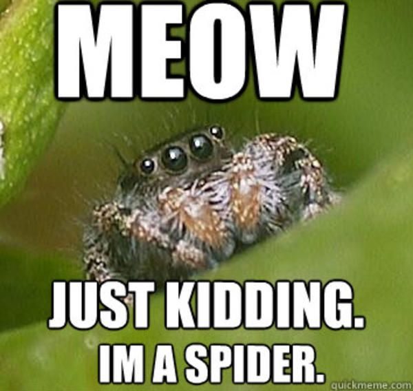 Image 325848 With Images Spider Meme Spiders Funny Funny