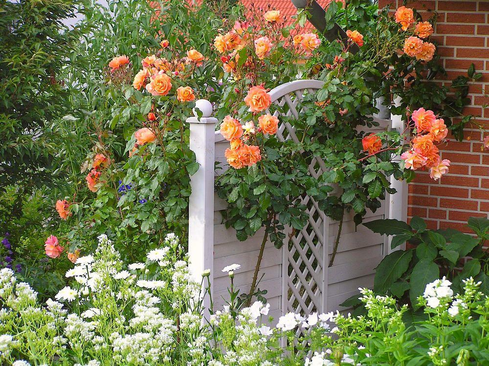 Minigarten Planen Und Gestalten Mini Garten Garten Gartengestaltung Ideen