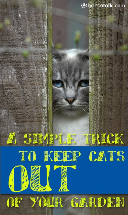 A Simple Trick To Keep Cats Out Of Your Garden Garden Outdoors Pinterest Gardens Cat