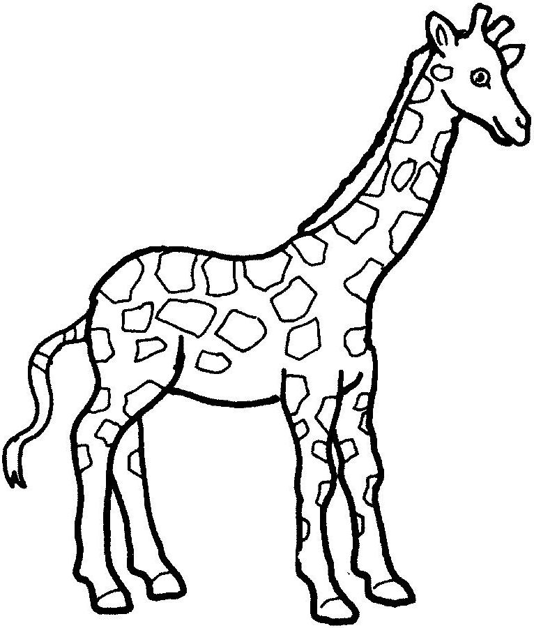 Girafe Coloring Mim5 Simple Giraffe Outline Print Out And Color