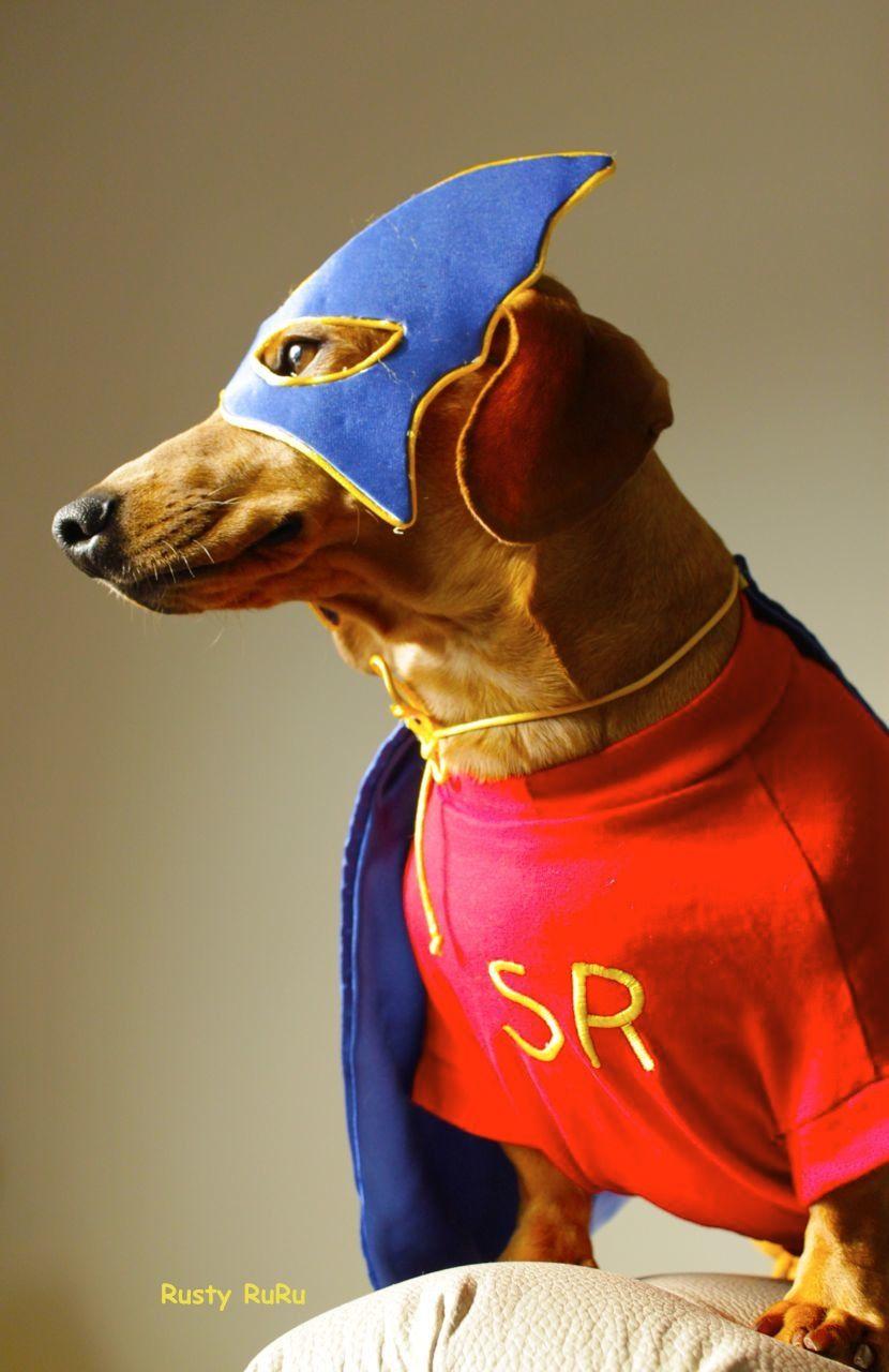 Super Ru To The Rescue Dachshund Love Dachshund Weiner Dog
