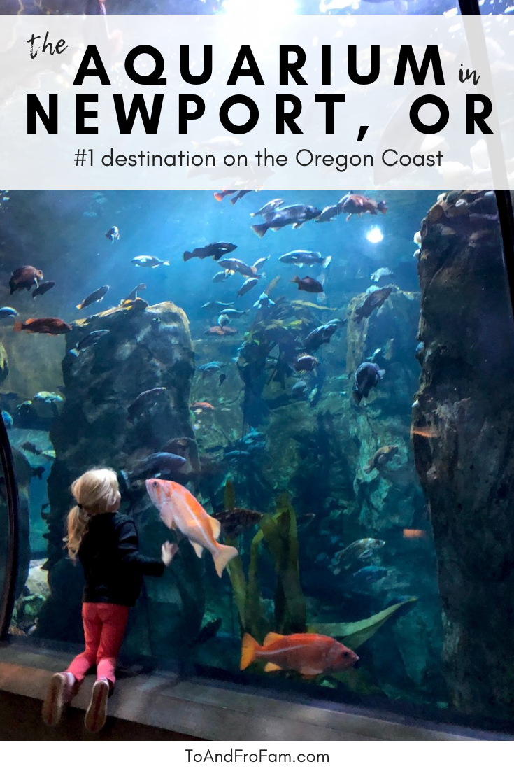 Insider's guide to the Oregon Coast Aquarium in Newport with kids #oregoncoast