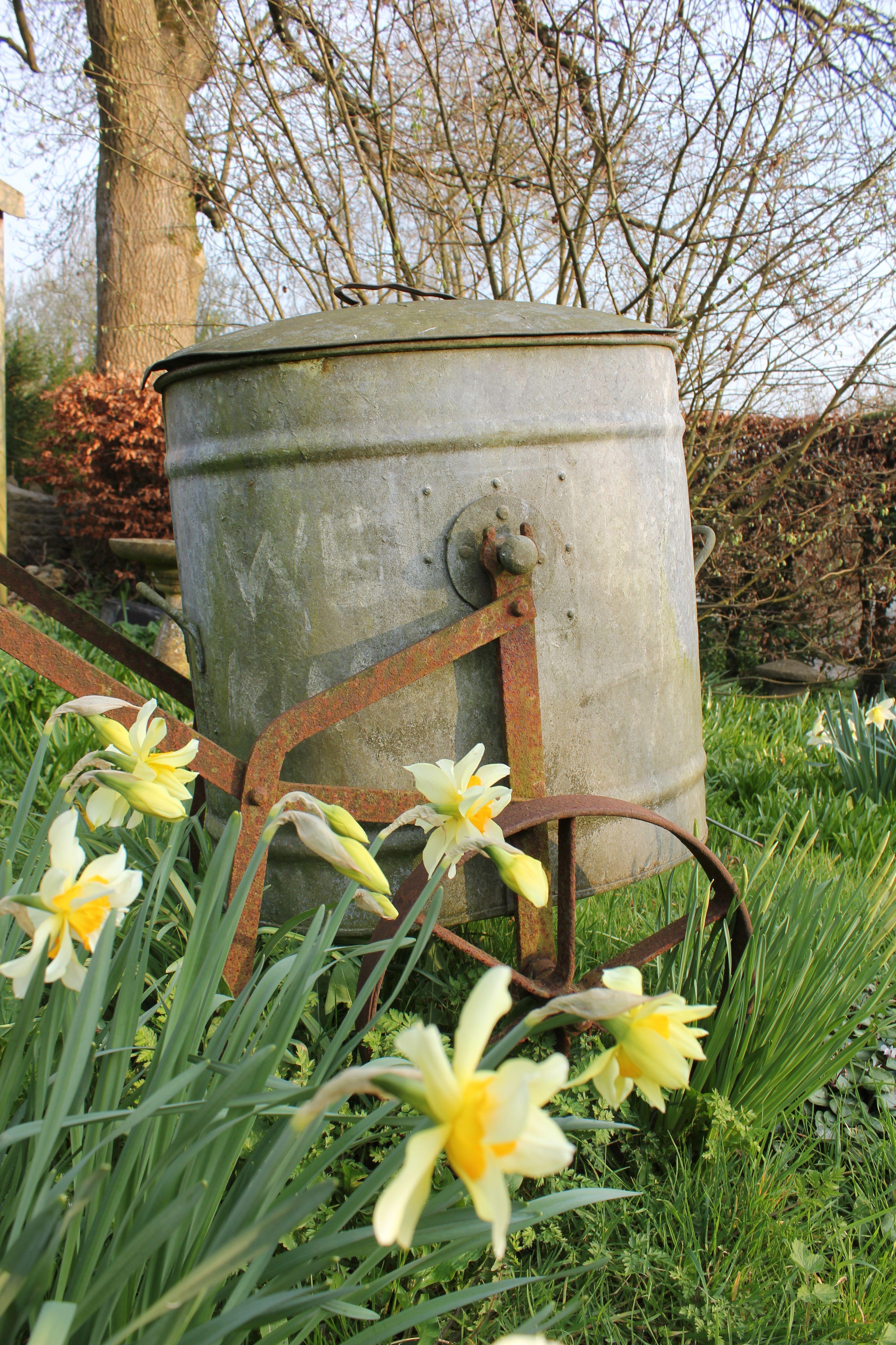 spring daffs in wild meadow. dorset, england <3 | ideas para el ...