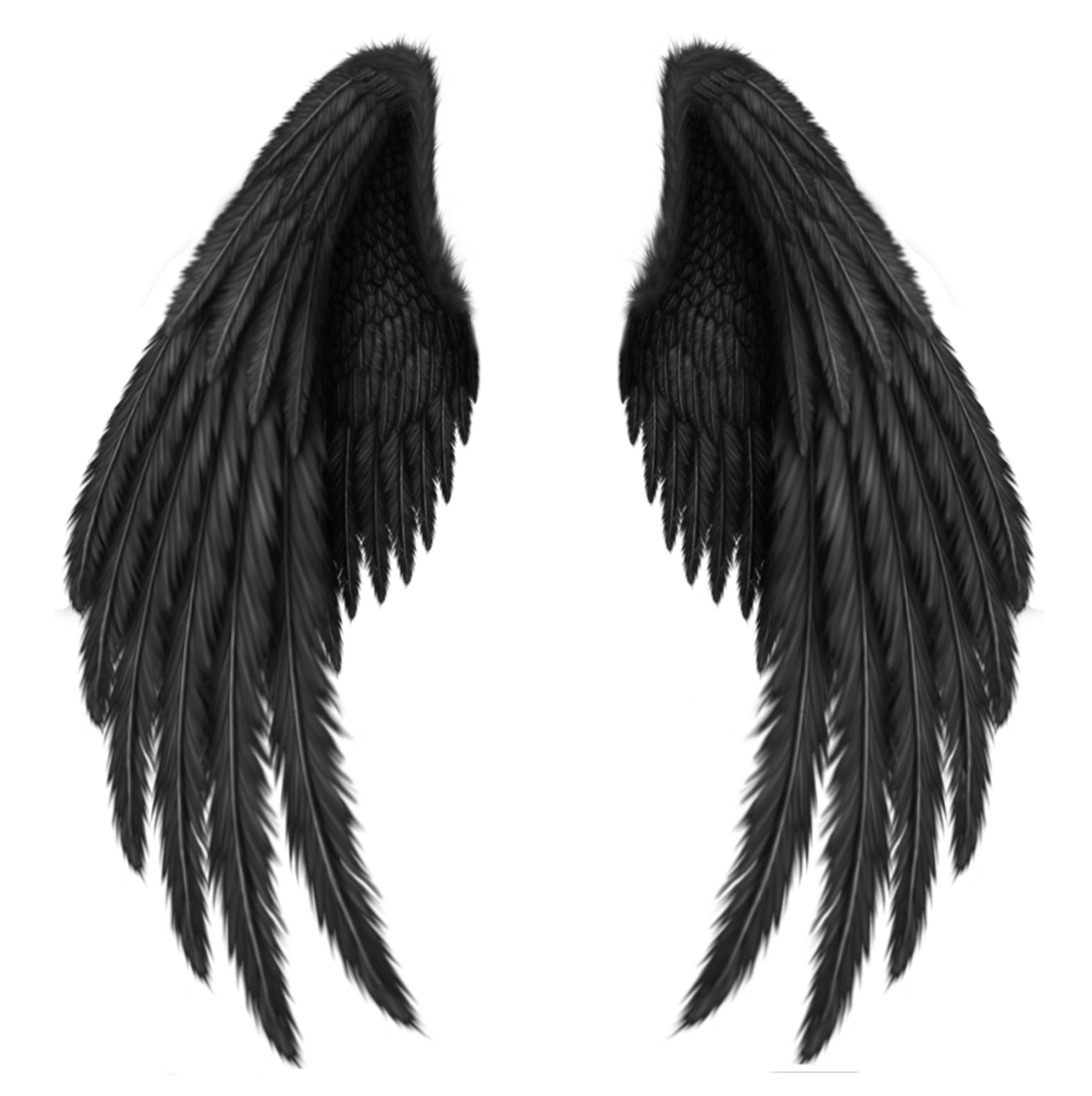 Transparent Black Wings PNG Clipart Picture | Artistically ...